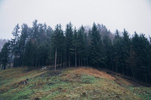 forest-691083_640